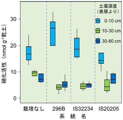 図3 窒素肥料施用下で播種後70日間栽培したソルガム根圏土壌の深度ごとの硝化活性