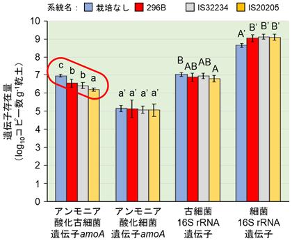 図4 窒素肥料施用下で播種後70日間栽培したソルガム根圏土壌(深度0~10 cm)中の各菌の遺伝子存在量