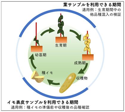 図3 二種類のサンプルが取得可能な時期