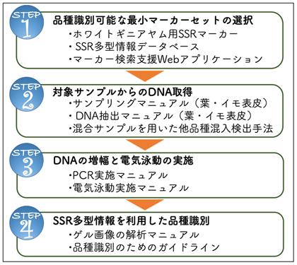 図5 SSRマーカーを利用した品種識別の流れと提供する技術・サービス