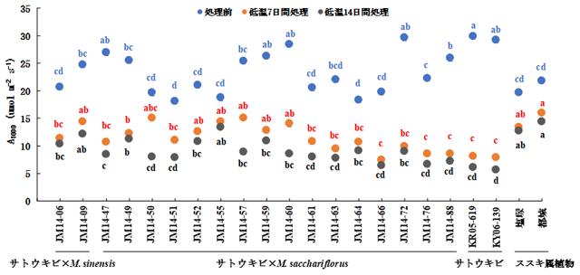 図1 サトウキビとススキ属植物の属間雑種における低温条件下での光合成速度