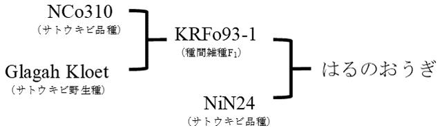 図2 「はるのおうぎ」の系譜
