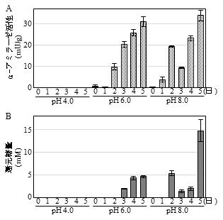 図3 酸緩衝液(pH 4.0, 6.0, 8.0)による浸漬処理の後、37℃で5日間保温した麺におけるα-アミラーゼ活性(A)および還元糖量(B)の消長