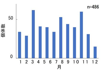 図2 パケオ個体群の孵化月分布