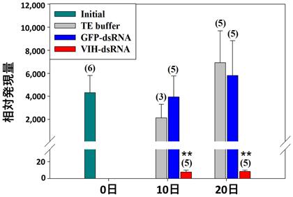 図2 VIH-dsRNA注射によるSGP-G遺伝子発現の抑制