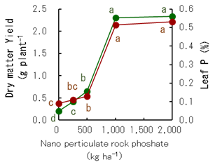 Fig. 4. Effects of nanoparticulate phosphate rock on spinach dry matter yield and leaf P concentration