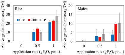 Fig. 2. Application effects of phosphate rocks calcinated with Na carbonate and K carbonate on rice and maize