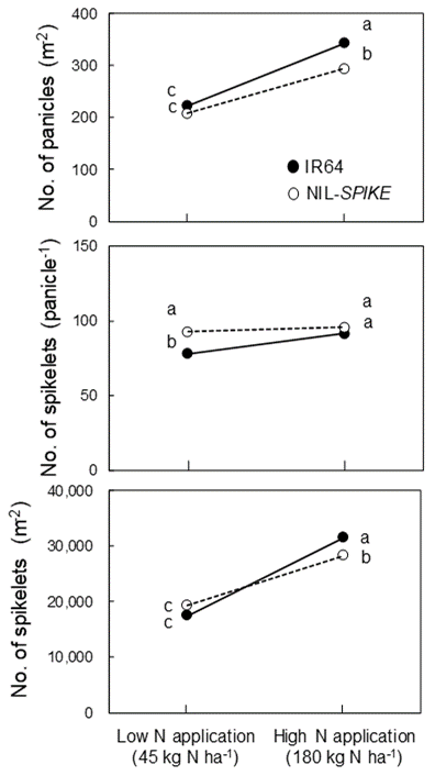 Fig. 3. Comparisons of the number of panicles m-2, the number of spikelets per panicle, and the number of spikelets m-2 between IR64 and NIL-SPIKE under low- and high-N applications. Different letters show significant difference at 5% level