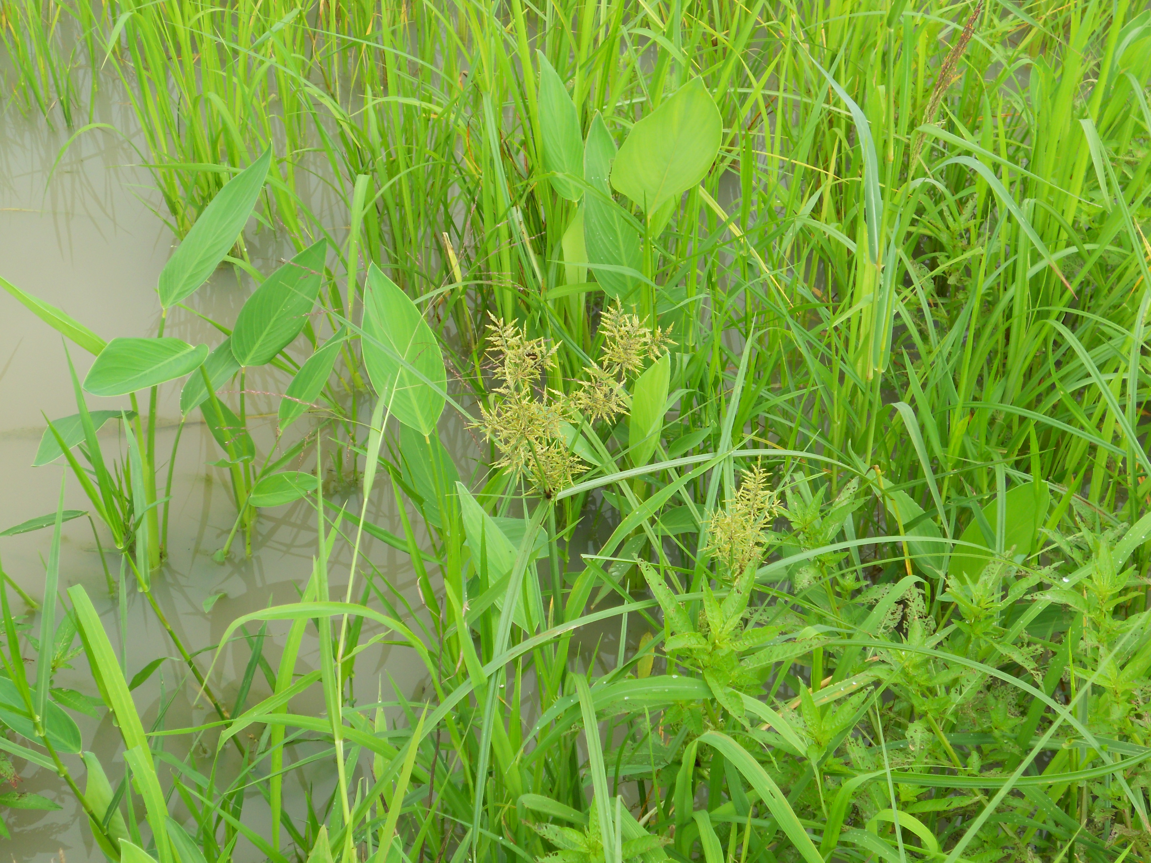 Plant growing in rice field