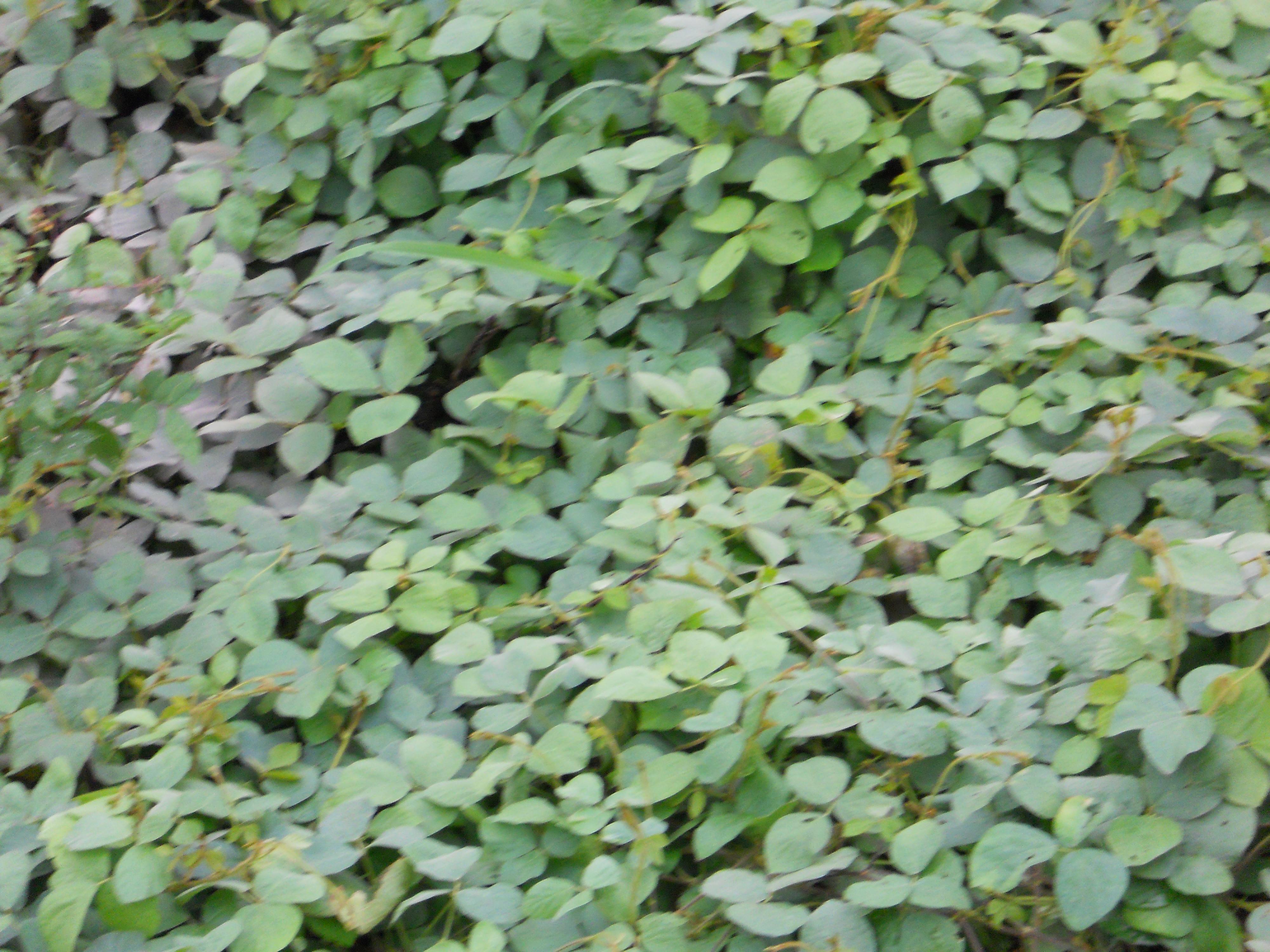 路傍に繁茂する成植物