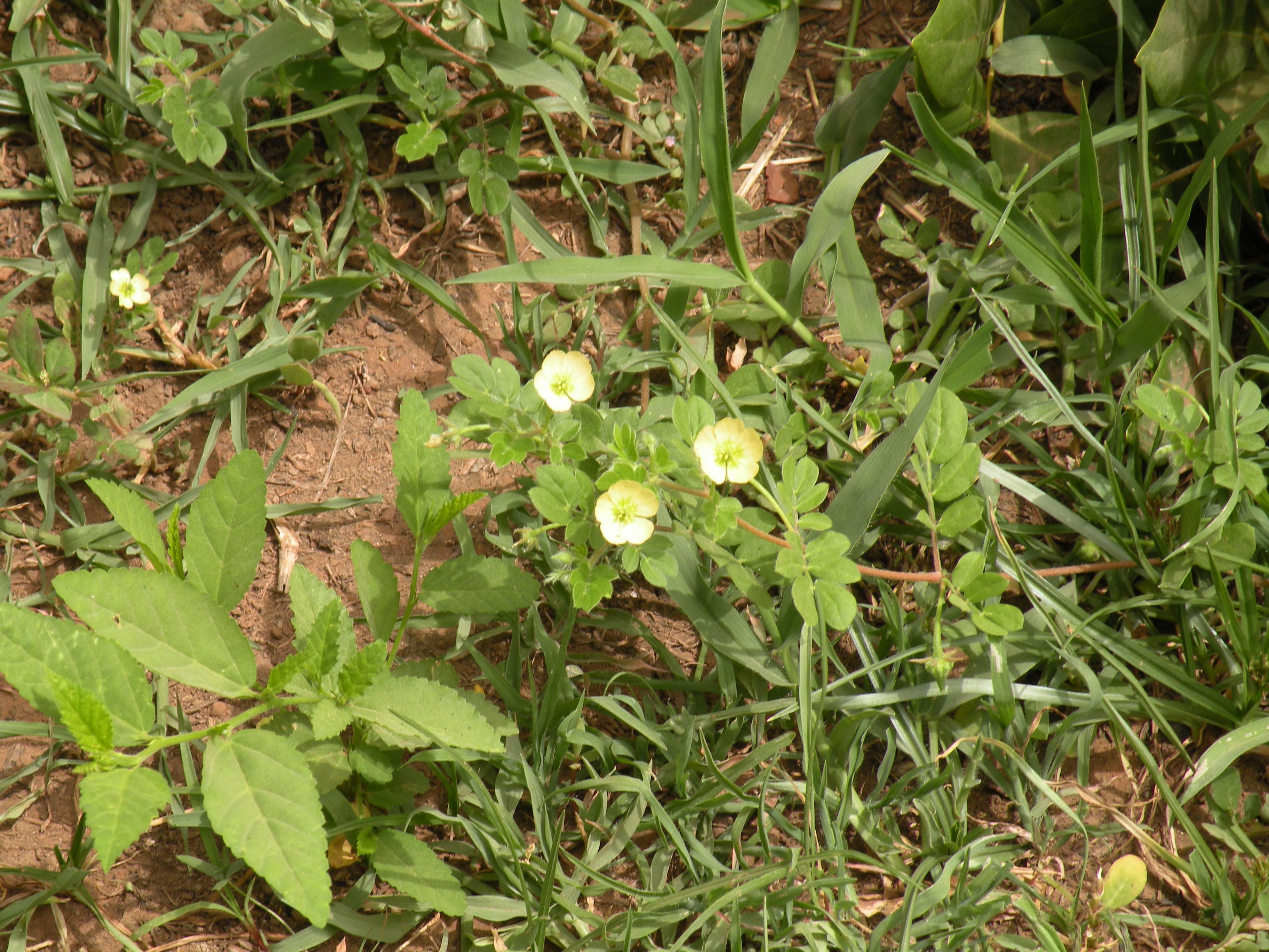庭園に生育する開花期の植物