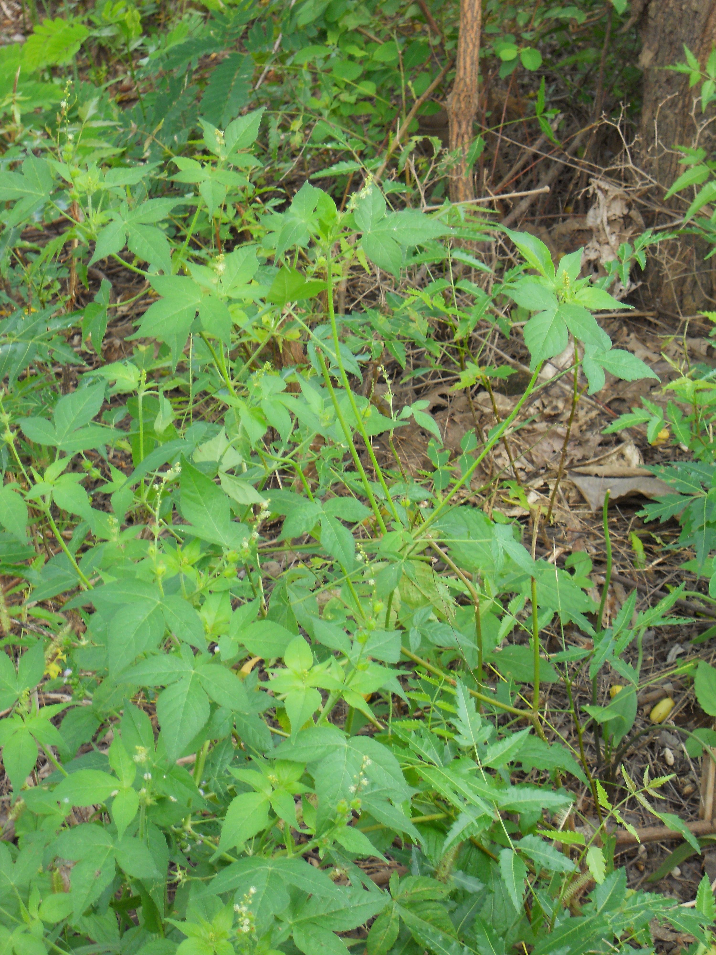 plants growing in upland field