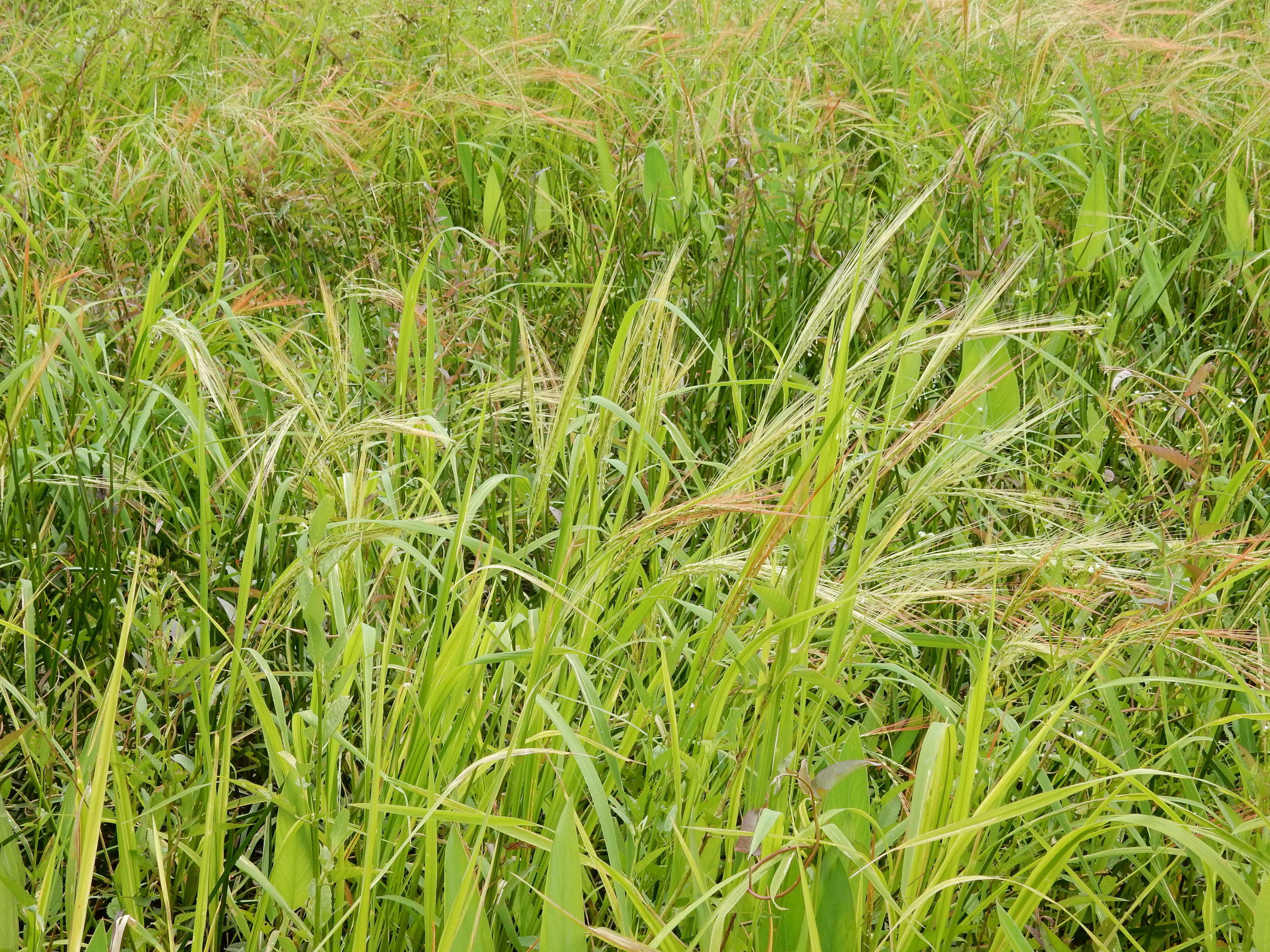 Plants growing in rice field