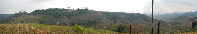 Specimen Trees of Secondly Forest in Lao PDR