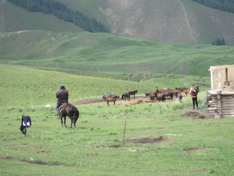 夏の放牧地 (Pasture in summer)