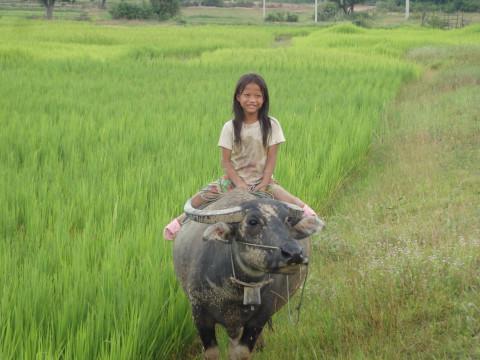 田んぼのパトロール (Patrol in paddy fields)