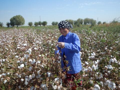 綿花に囲まれて (Surrounded by cotton)