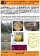 オイルパーム古木からの燃料用エタノール生産技術の開発